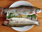 Whole Raw Trout $25kg