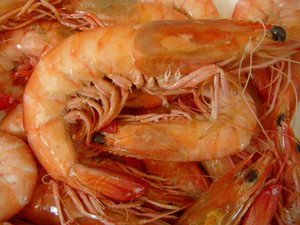 WA Cooked King Prawns XL $39kg