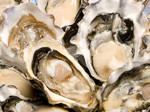 Oysters Half Shelll New Zealand $25 doz