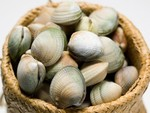 NZ Clams $19kg